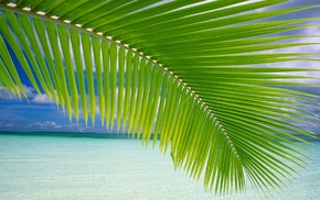 beach, palm trees, landscape