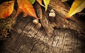 leaves, plants, wood, macro