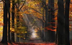 mist, nature, atmosphere, forest, sun rays, landscape