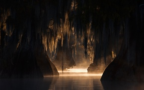 trees, swamp, morning, calm, nature, mist