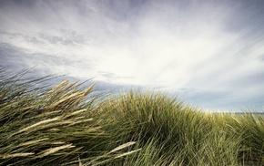 landscape, clouds, long exposure, plants, nature, horizon