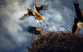 nature, blue, birds, nests