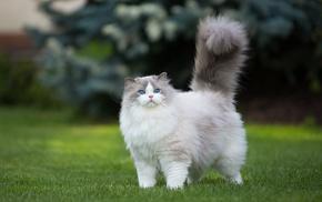 green, grass, cat, animals, blue eyes