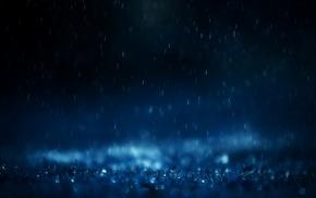 macro, depth of field, rain