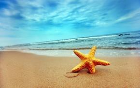 nature, starfish, beach