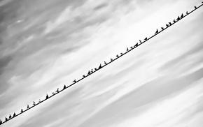 birds, monochrome, black, white, clouds, nature