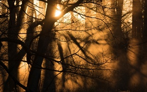 silhouette, forest, Sun, nature, mist, winter