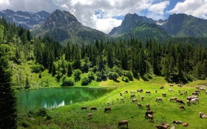 lake, Italy, animals, grass, pine trees, trees