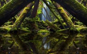Australia, moss, mirrored, reflection, landscape, rainforest