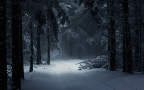fairy tale, path, daylight, trees, forest, nature