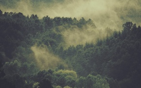 forest, nature, mist