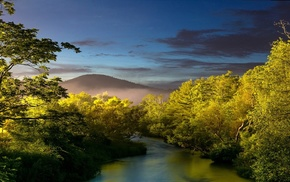 mist, sunset, nature, sunlight, shrubs, river