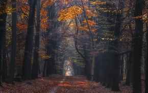 photography, forest, trees, landscape, sunlight, fall