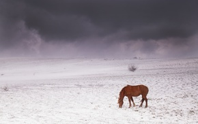 sky, mountains, horse, Crimea, snow
