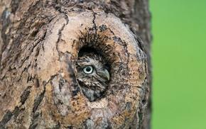 birds, owl, depth of field, grass, trees