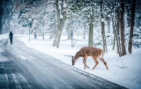 landscape, path, deer, trees, snow, nature