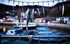 Iceland, fish, fish hooks