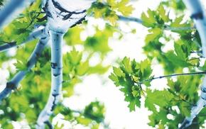 trees, leaves, nature