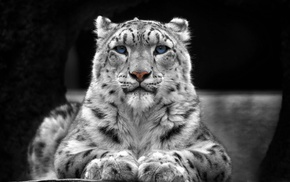 animals, selective coloring