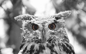 selective coloring, owl, animals