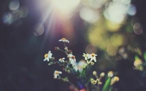 flowers, bokeh