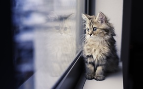 window, cat, paws, reflection