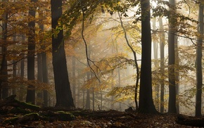 leaves, nature, beech, trees, landscape, sunlight