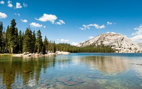 forest, pine trees, nature, California, hills, lake