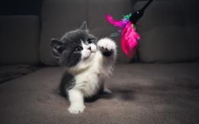 cat, baby animals