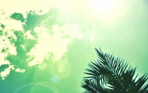 palm trees, sky