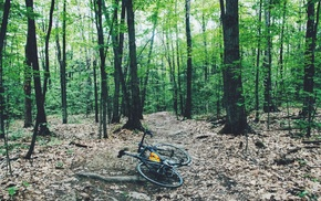 bicycle, trees, forest