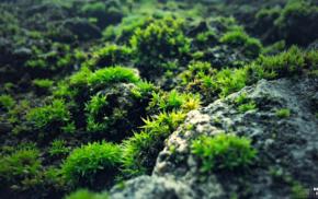 green, photography, blue, nature, rock, moss