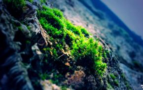 moss, photography, rock, nature, blue, green