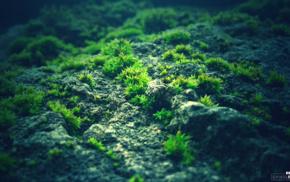 photography, green, blue, rock, nature, moss