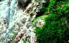 photography, green, plants, nature, moss, rock
