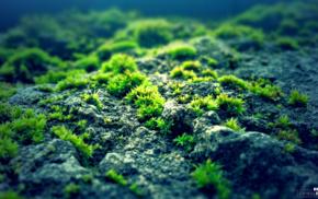 nature, blue, moss, photography, rock, green