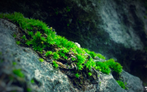 moss, blue, rock, photography, nature, green