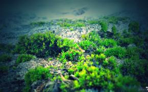 green, photography, blue, nature, moss, rock