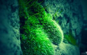 rock, moss, blue, green, photography, nature