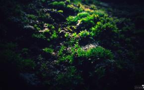 green, moss, macro, photography