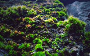 moss, macro, green, photography