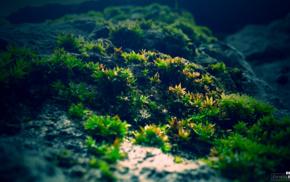 photography, green, macro, moss