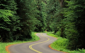 nature, road, Twist, landscape, grass, forest