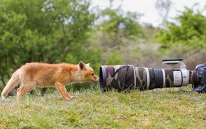 telephoto lens, Canon, camera, fox, landscape, trees