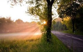 grass, mist, road, trees