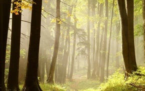 grass, mist, forest, trees