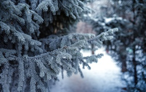 conifer, depth of field, winter, trees, forest, snow