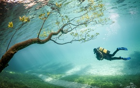 underwater, Austria, Grner See, lake, trees, branch