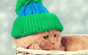 hat, baskets, animals, cat