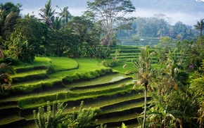 sunlight, Bali, shrubs, morning, hills, rice paddy
